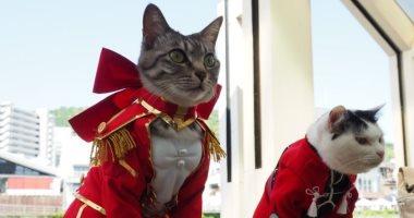 """يابانى يستلهم أزياء """"قطتيه"""" من مسلسلات كارتونية شهيرة.. صور"""