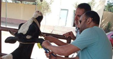 بيطرى كفر الشيخ تنظم قوافل علاجية وإرشادية بمراكز المحافظة