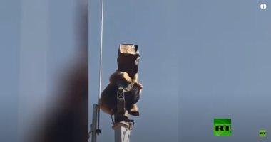 دب يتسلل إلى قاعدة عسكرية تركية ويصعد لأحد الأبراج.. فيديو