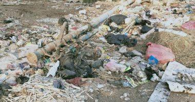 شكوى من تراكم القمامة بقرية نجير بمحافظة الدقهلية