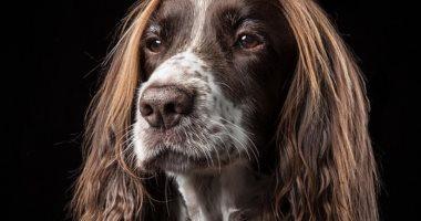 """خصلات شعر كلب تلفت سبب شهرته.. ومالكوه يرفضون """"الحلاقة"""".. صور"""