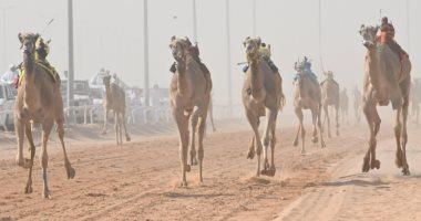 صور.. سباق الهجن السعودي ينعش اقتصاد المملكة