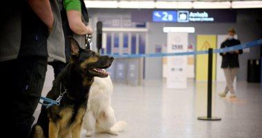 كلاب بقدرات خاصة تكتشف مصابى كورونا بمطار فنلندا بدون فحوصات.. صور