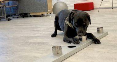 سلطات فنلندا تضع كلابا مدربة بمطار هلسنكى لاكتشاف المصابين بكورونا.. صور