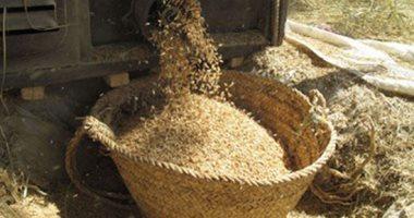 حصاد الأرز