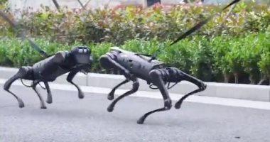 روبوتات كلاب وسيلة جديدة للشرطة الكندية للحفاظ على التباعد الاجتماعى.. فيديو