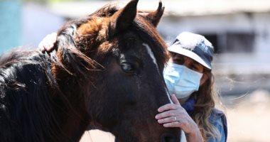الرحمة حلوة.. دار مسنين أرجنتينية لرعاية الخيول