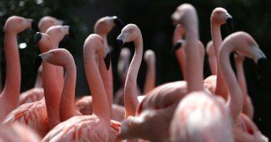 مصحة حيوانية.. حديقة سانتياجو تفتح أبوابهم لإنقاذ الحيوانات النادرة..ألبوم صور
