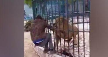 لحظة عقر أسد يد عامل فى حديقة الحيوان بالسنغال فيديو