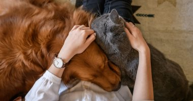 أفكار هدايا مناسبة لأصحاب الحيوانات الأليفة.. لو صاحبك غاوى تربية قطط وكلاب