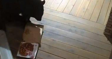 دب يأكل بيتزا وضعتها خدمة التوصيل فى كولورادو أمام أحد المنازل.. فيديو