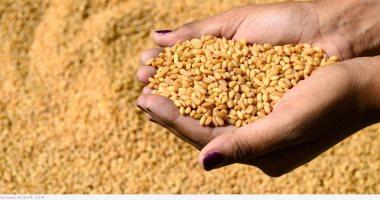 مؤسسة الحبوب السعودية تستورد 355 ألف طن من القمح من أستراليا وكندا 2021