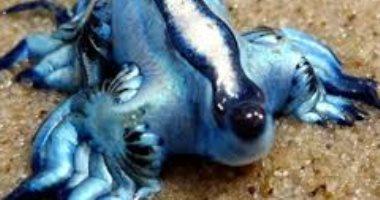 """""""البوكيمون"""" الأزرق يصل جزر الكنارى ويثير الرعب بين السياح .. صور"""