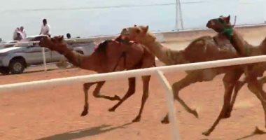 ننشر نتائج أول اشواط سباق نويبع للهجن بجنوب سيناء
