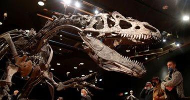 صور.. بيع هيكل عظمى لديناصور بـ3 مليون يورو فى مزاد بفرنسا