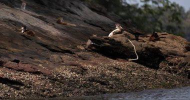 جزيرة القطط فى البرازيل تعانى من مجاعة ..والسبب فيروس كورونا..صور