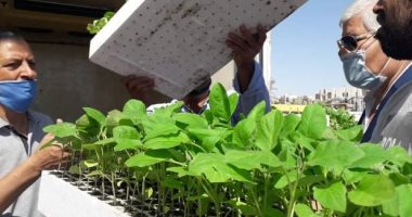 الزراعة: حملات على مشاتل الخضروات وتحذر الفلاحين من المخالف..اقرا التفاصيل