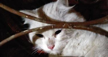 """الحماية المدنية بالقليوبية تنقذ قطة عالقة فى باب شقة بالقناطر الخيرية """"صور"""""""