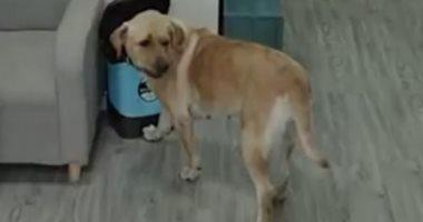 """كلب شقى.. يسرق """"آيس كريم"""" من ثلاجة صاحبه أثناء نومه والكاميرا كشفته.. فيديو"""
