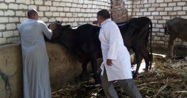انطلاق أعمال الحملة القومية لتحصين الماشية ضد الحمى القلاعية فى بنى سويف