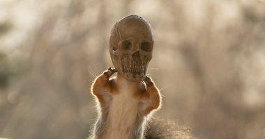 حيلة طريفة لمصور سويدى لالتقاط صور مخيفة للسناجب فى عيد الهالوين.. صور