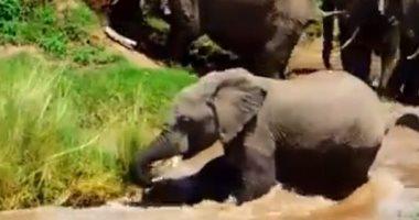 باحثون يراقبون الأفيال الأفريقية بقمر صناعى على ارتفاع 600 كيلومتر.. اعرف السبب