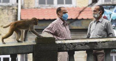 آلاف القردة يغزون مدينة هندية ويسرقون سكانها.. صور