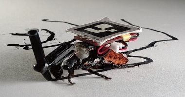 يعنى إيه صرصار سايبورج؟.. اعرف تفاصيل التقنية وكيف يمكن تركيبها بالحشرة؟
