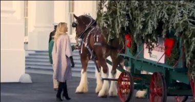 ميلانيا ترامب تستقبل أخر شجرة كريسماس فى عهد الرئيس الأمريكى.. اعرف ماذا قالت