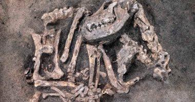 صور.. العثور على بقايا كلب مدفون منذ 8400 عام مع سيده بالسويد