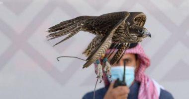 السعودية نيوز |                                              كبرياء وشموخ في السماء.. تنافس كبير بين الصقور فى مهرجان الملك عبدالعزيز