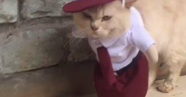 إندونيسى يصمم أزياء مثيرة للقطط ويربح 210 دولارات شهريا.. اعرف القصة