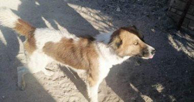 أول فيديو وصور لكلب رصد صاحبه 30 ألف جنيه مكافأة الإبلاغ عن قاتله بقنا