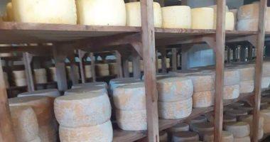 ضبط مصنعين لصناعة الجبن بدون ترخيص في حملة تموينية شرق قناة السويس