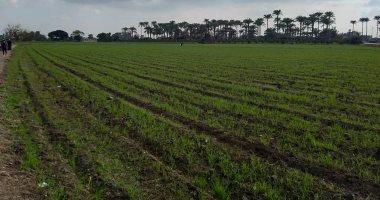 """""""زراعة دمياط"""": متابعة الزراعات الشتوية ولم نتلقى شكاوى بسبب حالة الطقس"""