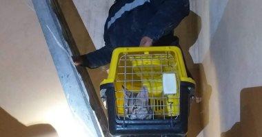 الحماية المدنية تنقذ قطة عالقة أعلى سطح عمارة 10 أيام بدون طعام ببنى سويف