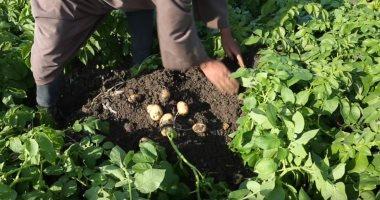 الزراعة: خرائط لأماكن ثلاجات تخزين تقاوى البطاطس المحلية.. اقرا التفاصيل