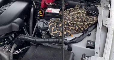 امرأة تكتشف ثعبانا طوله 2 متر مختبئا فى محرك السيارة بأستراليا.. فيديو وصور