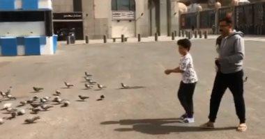 محمد رجب وابنه يوسف يطعمان الحمام فى ساحة المسجد النبوى.. فيديو وصور