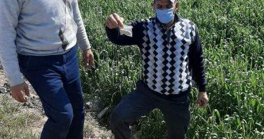 """الزراعة تنظم حملة قومية لمكافحة """"الفئران"""" لحماية محصول القمح"""