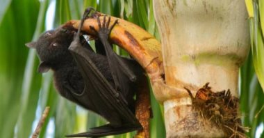 All you need to know about the Nipah virus, diagnosis and prevention methods