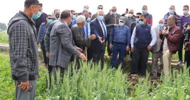 """""""الزراعة"""": 28 مديرية تتابع حقول القمح حتى الحصاد لزيادة الإنتاج"""