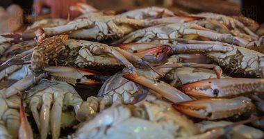 استقرار أسعار الأسماك اليوم الجمعة بسوق العبور للجملة