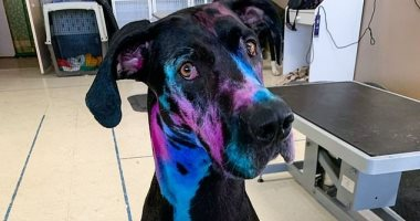 أمريكية تصبغ كلبها بالألوان المضيئة لمساعدة الآخرين على تقبله بسبب حجمه.. صور