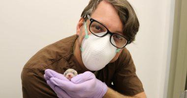 إليزابيث آن.. أول حيوان معرض للانقراض يستنسخه علماء أمريكيون