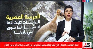 شكرا للعرسة.. الحيوان الذى أنقذ أرواح ملايين المصريين من الموت بالطاعون