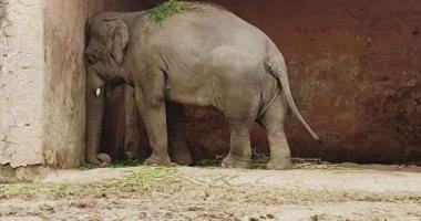 """""""الفيل الأكثر وحدة بالعالم"""" ينقذ حديقته السابقة فى باكستان بــ7.5 مليون دولار"""