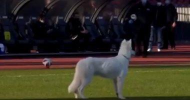 كلب رئيس النادى يقتحم ملعب زيورخ وسيون ويجبر الحكم على إيقاف المباراة.. فيديو