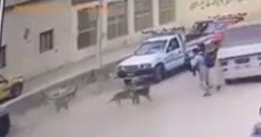 كلبان طارداه.. تفاصيل مأساوية عن مصرع طالب تحت عجلات ميكروباص البدرشين