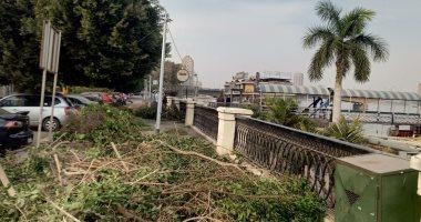 مذبحة جديدة للأشجار بشارع النيل بالجيزة.. صور